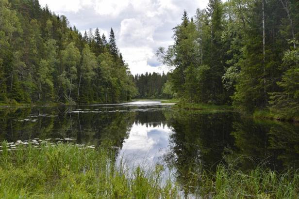 Svartoren i Østmarka er et flott skogstjern - Oslomarka - Fantastiske marka