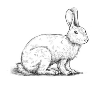 how-to-draw-a-rabbit10