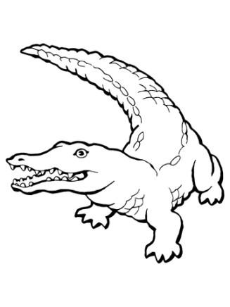 realistic-crocodile-coloring-page
