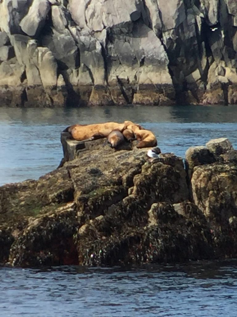 Fantasy Aisle, alaska travel recommendations, Sea Lion Sightseeing with Kenai Fjord Tours