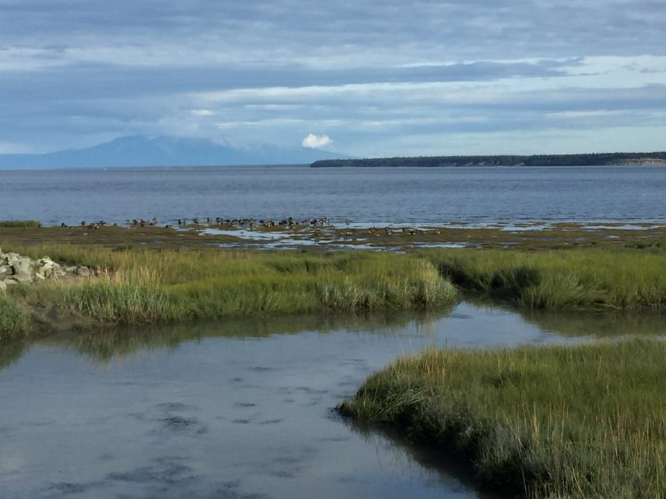 Fantasy Aisle, alaska travel recommendations, Anchorage, Cook Inlet from the Coastal Walk