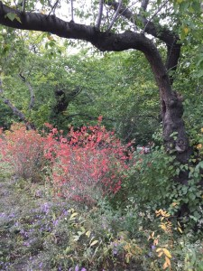 Fantasy Aisle, Fall in Central Park surrounding the Jackie Kennedy Onassis Reservoir