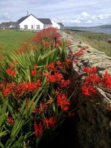 Fantasy Aisle, The Irish Cottage, Ireland