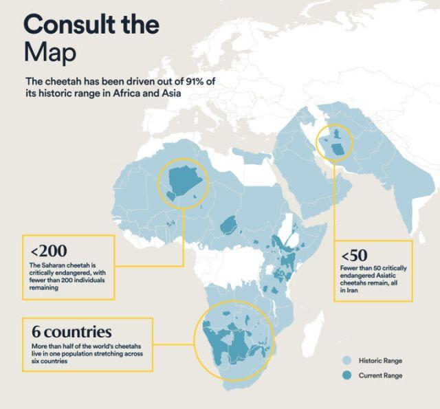 cheetah population map