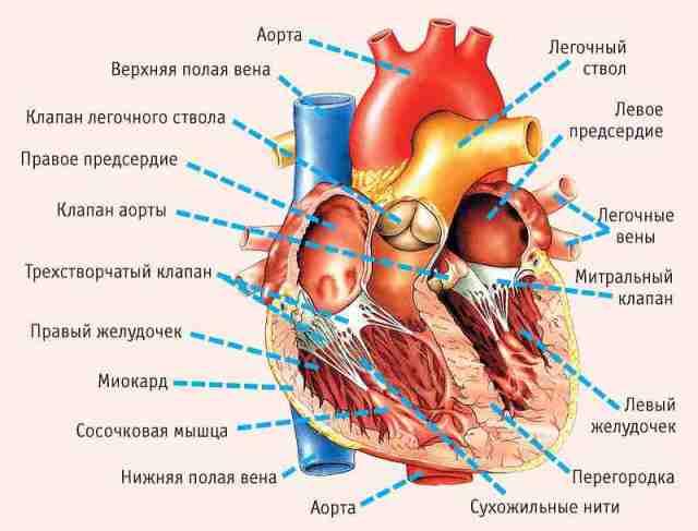 11 симптомов, указывающих на серьезные проблемы с сердцем!