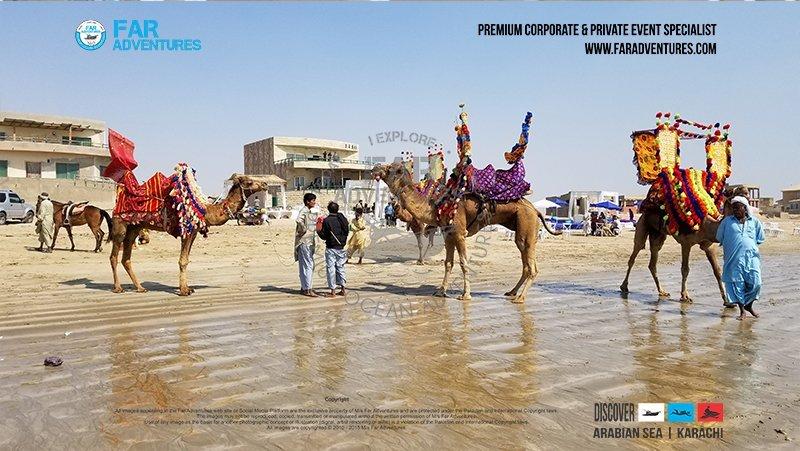 Horse & Camel