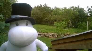 A Helsinki-Budapest járat potyautasa, Moominpappa már itthon, a hátsó kertünkben
