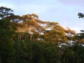 Lower Urubamba Forest