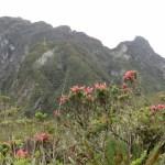 Cerro San Nicolás, Farallones del Citará