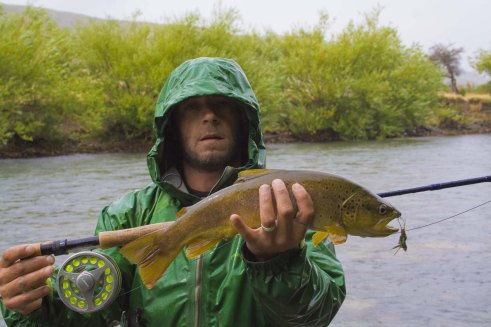 One of many brown trout caught on the Rio Corcovado