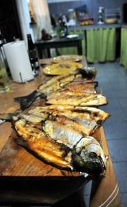 A feast of Pira Pita & Pacu