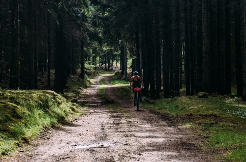 Sabina cycling in the forests in Sweden