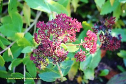 #Herbstfarben #Natur #GoldenerOktober #Fotografie