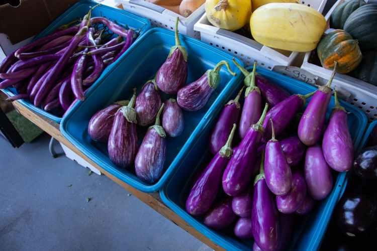 Härligt med aubergine i vegetarisk moussaka