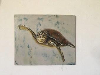 Schildkröte, Acryl auf Holz ca 30x50cm Turtle