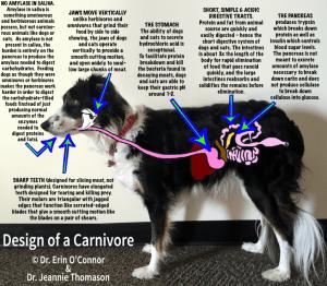 Design-of-a-carnivore