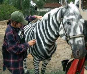 A lot of work went into making this zebra!
