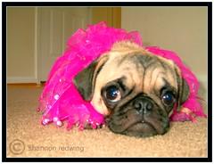 Kiki, glamour girl