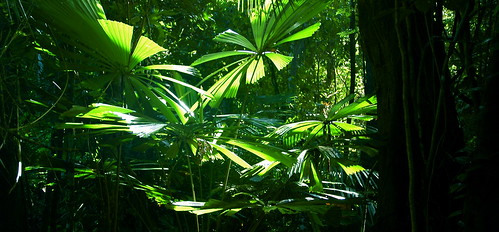 more rainforest by tauntingpanda, on Flickr