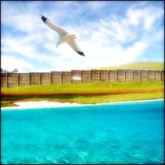 Blank Airport - Jonathan Livingston Seagull