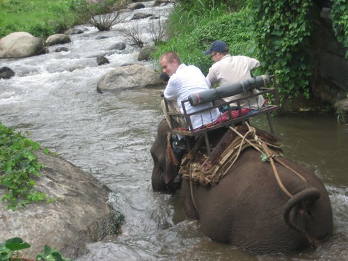 Elephant Riding - Chiang Mai Provence, Nothern Thailand