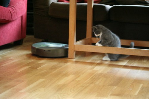cat and older roomba