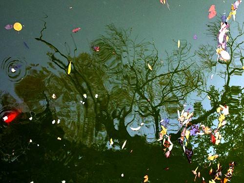 Lake shadows / In adancimea adancurilor