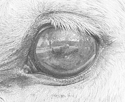Nick's Eye