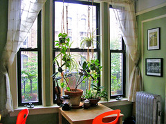 window of plants and more mismatched chairs