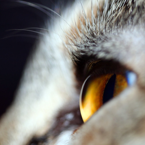 Mirada felina (by s a u l .)