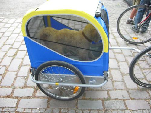 Algunos prefieren llevar a su perrito. Photo: Gabriele Kantel