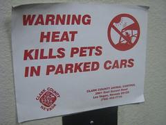 Stick dog in peril....
