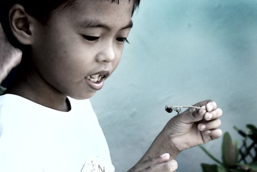 Tambulilid, Ormoc City boy spider playing  Buhay Pinoy Philippines Filipino Pilipino  people pictures photos life Philippinen  菲律宾  菲律賓  필리핀(공화�)