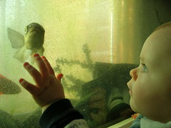 Something Fishy by Tub Gurnard