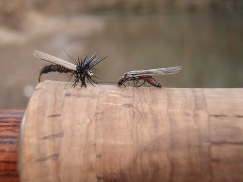 Stonefly Pattern and the Real Thing