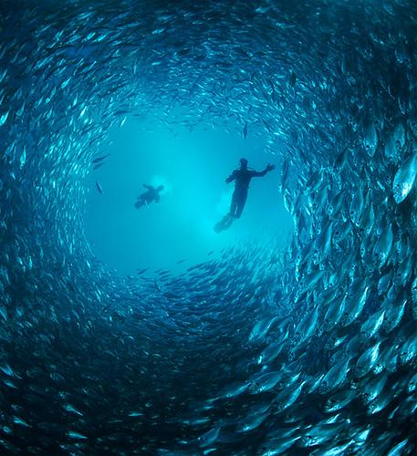 tunnel fish