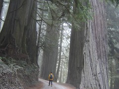 Redwoods in Jedediah Smith Redwoods State Park