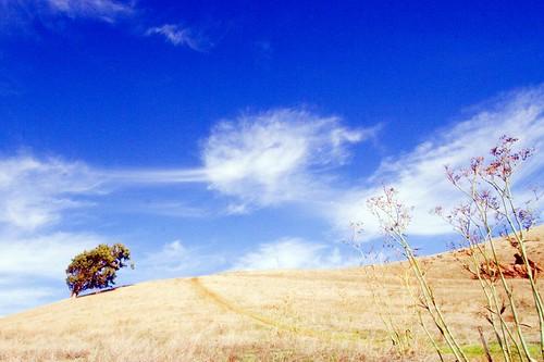http://www.flickr.com/photos/65031923@N00/308349421