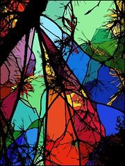 Branching Glass