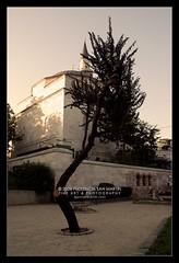 Istanbul Tree