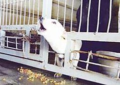 Gilboa Israel Regional Dog Pound Write the Minister of Ag