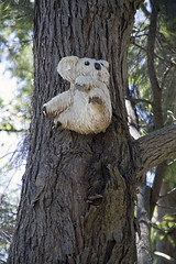 Koala bear nailed to the tree