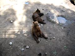 A Bear with an Attitude