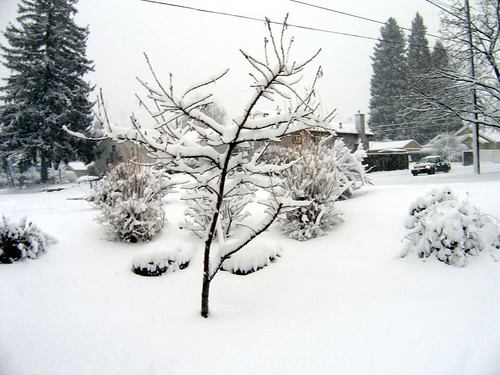 1-20-we-got-snow