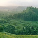 """Balinese Rice Fields <a style=""""margin-left:10px; font-size:0.8em;"""" href=""""http://www.flickr.com/photos/36521966868@N01/15568082/"""" target=""""_blank"""">@flickr</a>"""