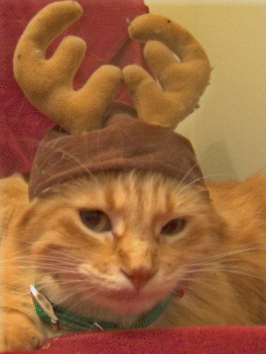 I hate you, I hate you, I hate you, I hate this hat. Oh the things I will do for cat nip.