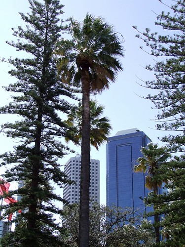 Trees & Buildings @ Perth, Australia