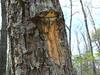 John's Creek Mountain Trail: Tree Devours Blaze