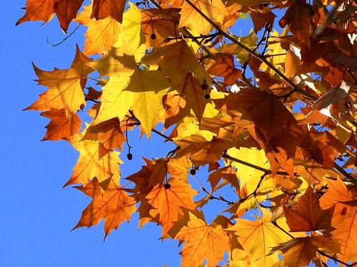 Winter tree / Árbol de inverno