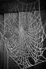 Frozen Web 1